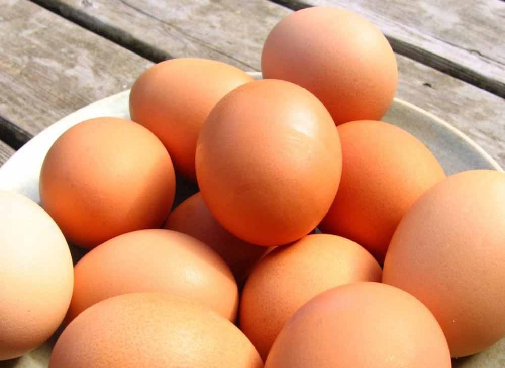 yumurtanin-onemi
