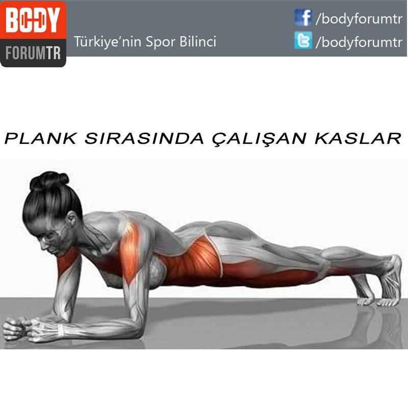 plank kaslar