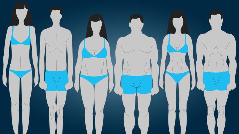 vücut tipi